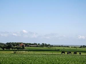 Meer weten van het landschap om je heen? De nieuwe Cursus Gastheer Nationaal Landschap Zuidwest Fryslân gaat weer van start!